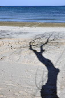 Free Evening Tree Stock Image - 24304471