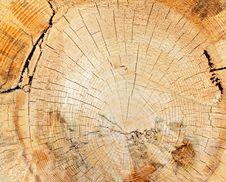 Free Tree Stump Closeup Royalty Free Stock Photo - 24305355