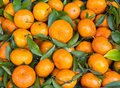 Free Fresh Orange Fruit Stock Image - 24311461