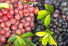 Free Fresh Grape Fruit Stock Photography - 24311562
