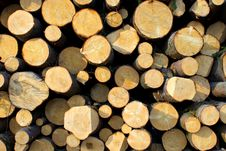 Free Pile Of Wood Logs Stock Photos - 24315633