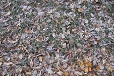 Free Frozen Leaves Royalty Free Stock Photos - 24318098