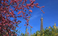 Free Parisian Spring Royalty Free Stock Photo - 24318775
