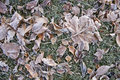 Free Frozen Tree Leaves On Grass Stock Photos - 24321343