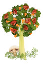 Free Tree Of Parsley And Celery Stock Photography - 24329452