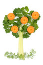 Free Tree Of Parsley And Celery Stock Photo - 24329500