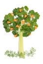 Free Tree Of Parsley And Celery Stock Images - 24329514