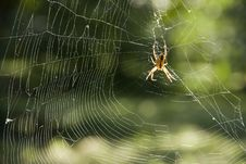 Free Spider On Web Stock Photography - 24321692