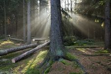 Sun Rays In Forest Stock Images