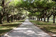 Free Avenue Of Oaks Stock Image - 24326451
