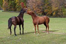 Free Horseplay Stock Photography - 24330432