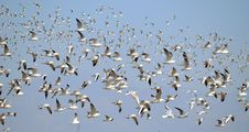 Free Seagulls Stock Photos - 24332653