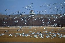 Free A Group Of Seagull And Sandy Beach Royalty Free Stock Images - 24332659