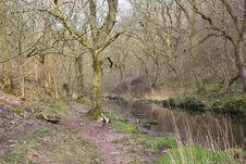 Free River Running Through A Woodland Stock Photography - 24334882