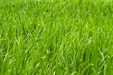 Free Early Morning Dew On Grass Stock Photos - 24335813