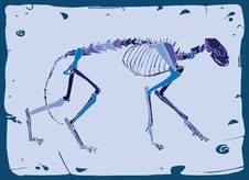 Side View Of Cat Skeleton Royalty Free Stock Images