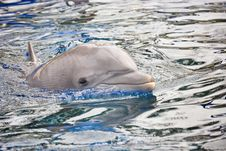 Free Dolphin Swimming Stock Image - 24346351