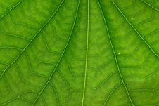 Free Green Leaf Texture Stock Image - 24349181