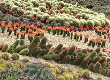 Free Different Cactuses In Open Space Royalty Free Stock Photography - 24351377