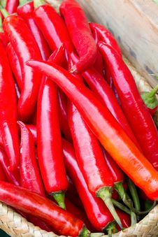 Free Many Spicy Red Chilli Royalty Free Stock Photo - 24351455