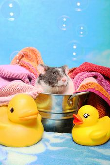 Mouse In A Bath Tub Stock Image