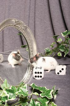 Free Mouse In A Mirror Royalty Free Stock Photography - 24353307