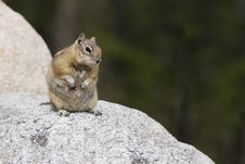 Free Ground Squirrel On A Rock Royalty Free Stock Photos - 24353428