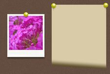 Free An Old Photo Of Flowers And Paper Royalty Free Stock Images - 24365939