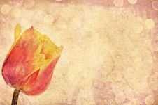 Free Vintage Tulip Stock Image - 24366031