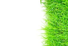 Free Grass And White Background Stock Image - 24367161