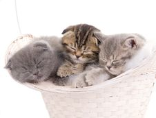 Free Beautiful Kittens In Basket Royalty Free Stock Images - 24376109