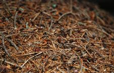 Free Surface Of The Anthill Royalty Free Stock Image - 24378166