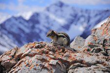 Free Ground Squirrel. Stock Photos - 24380003