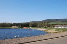 Free Swans At Lochore Meadows Stock Images - 24380584