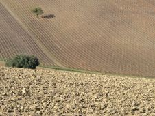 Farm In Val Of Recanati, Italy Royalty Free Stock Images