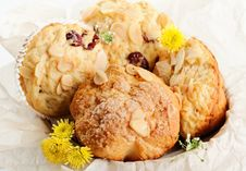 Free Muffins Stock Photos - 24381323