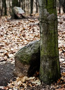 Free Tombstones At Jewish Cemetery Royalty Free Stock Photography - 24394647