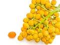 Free Ripe Areca Nut. Royalty Free Stock Images - 24395259