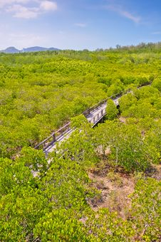 Free Mangrove Forest Royalty Free Stock Photos - 24392358