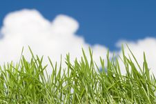 Free Green Grass Stock Image - 24395041
