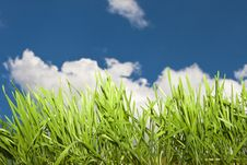 Free Grass Royalty Free Stock Photography - 24395057
