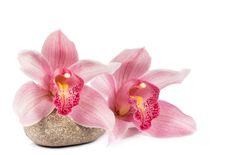 Free Tropical Orchid With A Stone For A Spa Royalty Free Stock Photography - 24396287