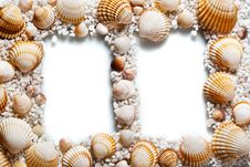 Free Frame For Your Photo. Shells On White Background Royalty Free Stock Photo - 24396845