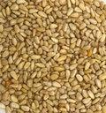 Free Pine Nuts Stock Image - 2441891