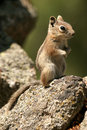 Free Chipmunk On The Rocks Standing Stock Photography - 2443892