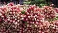Free Fresh Radish Stock Images - 2443914