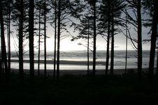 Free Scenic Coastal Trees Stock Images - 2440174