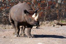 Free Rhinoceros Stock Image - 2441091