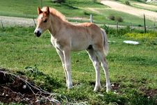 Free Foal Stock Photography - 2441282