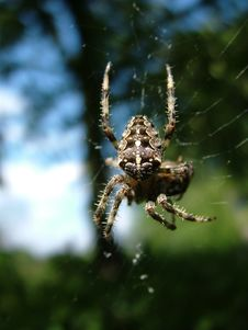 Free Spider Hunting Stock Images - 2444194